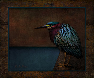 The Stain Glass Bird