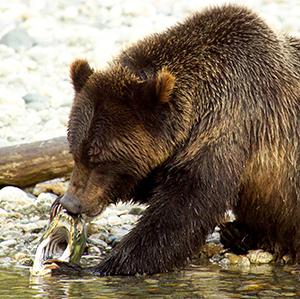Nature&Wildlife_Bear14